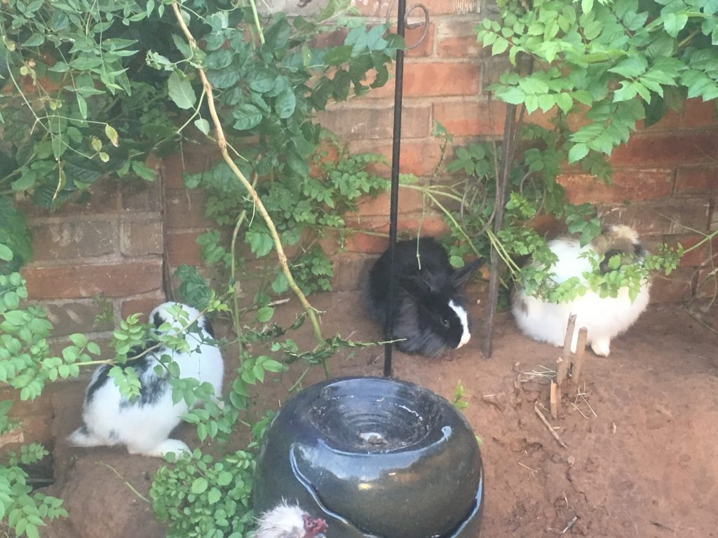 bunnies in the courtyard